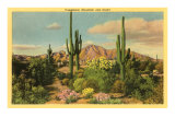 Camelback Mountain, Saguaros, Arizona Poster