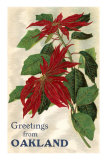 Greetings from Oakland, California, Poinsettias Photo