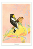 Bobolinks, Illustration Poster