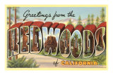 Greetings from Redwoods, California Posters