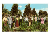Raisin Vineyard, Fresno, California Posters