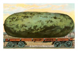 A California Watermelon, on Flatbed Train Car Prints