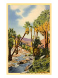 Creek Through Palm Canyon, Palm Springs, California Art