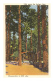 Cabin in Northern Pines, Minnesota Prints