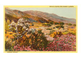 Chollas and Wildflowers, Borrego Springs, California Poster