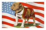 Marine Corp Boxer Dog with Flag Psters
