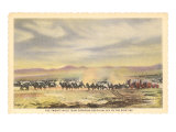 Twenty-Mule Team, Death Valley, California Prints