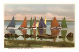 Rainbow Fleet, Nantucket, Massachusetts Photo