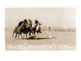 Woman's Four Horse Catch Prints