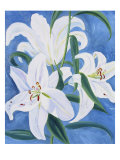Lillies Giclee Print by Mary Stubberfield