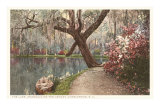 Magnolia on the Ashley, Charleston, South Carolina Print