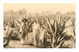 Natives on Maguey Plantation, Mexico Posters