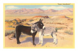 Desert Sweethearts, Nuzzling Burros Photo