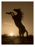 Rearing Horse Silhouette Lmina gicle por Robert Dawson