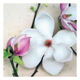 Magnolia Diva I Giclee Print by Heather Johnston