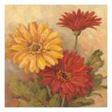 Gerber Daisies II Giclee Print by Barbara Mock