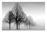 Winter Trees III Giclee Print by Ilona Wellmann