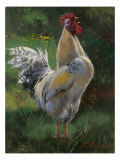 White And Yellow Rooster Premium Giclee Print by Nenad Mirkovich