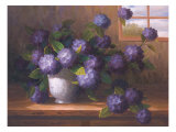 Hydrangea Blossoms ll Prints by  Welby