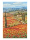 Red Poppy Field Premium Giclee Print by Sung Kim