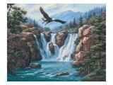 Soaring Eagle Premium Giclee Print by Sung Kim
