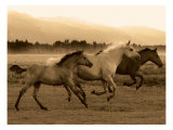Horse Trio Giclee Print by Robert Dawson