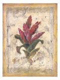 Bromelia Prints by Shari White