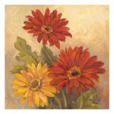 Gerber Daisies I Giclee Print by Barbara Mock