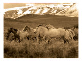 Horses Running I Giclee Print by Robert Dawson