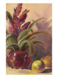 Bromelia Exotica Prints by Shari White