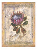 Protea Prints by Shari White