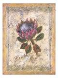 Protea Prints by Shari White