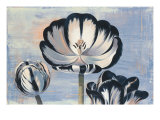 Three Tulips Giclee Print by Curtis Parker