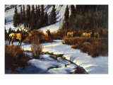 Winter Range Elk Giclee Print by Paco Young