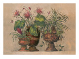 Taste of the Tropics Giclee Print by Barbara Mock
