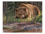 September Grizzly Giclee Print by Bruce Miller