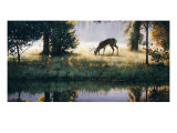 Walking on Sunshine Prints by Larry Chandler