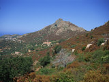 Landscape Near Corbara, Balagne Region, Corsica, France, Europe Photographic Print by Nelly Boyd