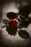 Red Gothic Rose Prints