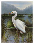Morning Egret Premium Giclee Print by  Kilian