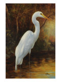 Evening Egret Giclee Print by Kilian