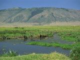 Ngoitokitok Springs, Ngorongoro Crater, UNESCO World Heritage Site, Tanzania, East Africa, Africa Photographic Print by Nigel Callow