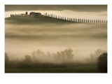 Trees in Mist II Poster by Jim Gamblin