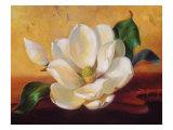Magnolia Glow II Prints by Fran Di Giacomo