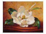 Magnolia Glow I Prints by Fran Di Giacomo
