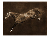 Free Jumper III Giclee Print by Robert Dawson