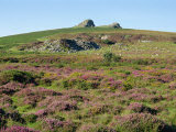 Heather and Gorse Below Haytor, Dartmoor, Devon, England, United Kingdom, Europe Photographic Print by Michael Black