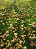 Fallen Autumn Leaves Photographic Print by Tom Ang