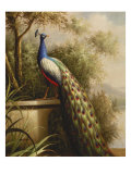 Regal Peacock Giclee Print