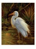 Tropical Egret II Premium Giclee Print by  Kilian